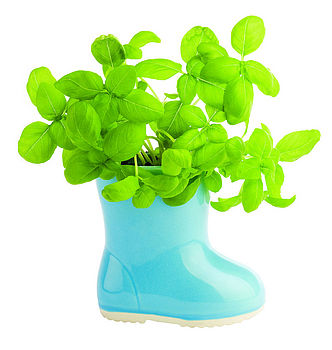 kids herb and flower welly boot plant pot kit